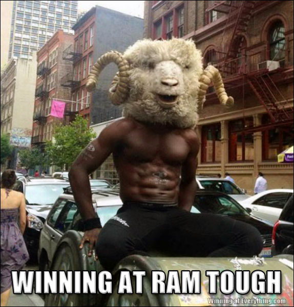 Dont Be Sheepish Winning At Everything